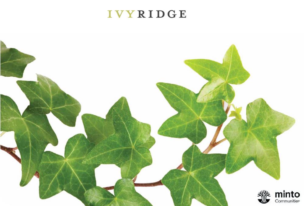 Minto梦想家园系列 每尺$300起 全新高端联排/独立屋:Ivy Ridge